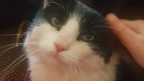 تعثر على قطها المفقود منذ سبع سنوات بفضل رقاقة إلكترونية